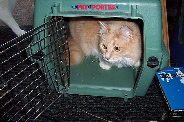 This cat is in no danger, but every year in the United States dozens of pets die while in transit as airline cargo. This number is a tiny percentage of an estimated more than 2 million live animals that are shipped as U.S. airline cargo each year. (flickr/FelineNoir.com ) Photo: Flickr/FelineNoir.com / HC