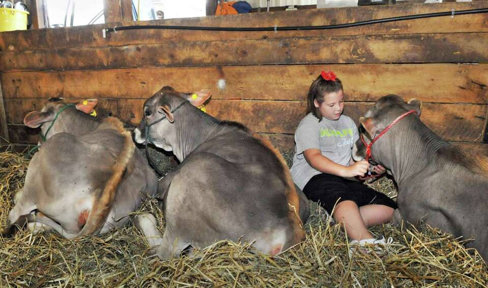 Kaylie Telford, 8, of White Creek sits with her Brown Swiss Heifers in the livestock barn during ope