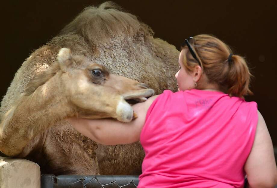 Rubbed the wrong way?Some of the animals in the Small World petting area of the Gladys Porter Zoo in Brownsville, Texas, would rather not be petted. Photo: Christian Rodriguez, Associated Press