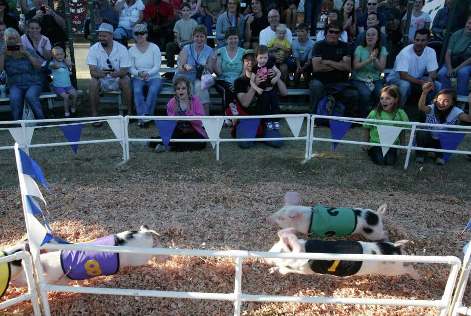 Pigs run around a track during the Alaskan Pig Races. Photo: Sofia Jaramillo / SEATTLEPI.COM