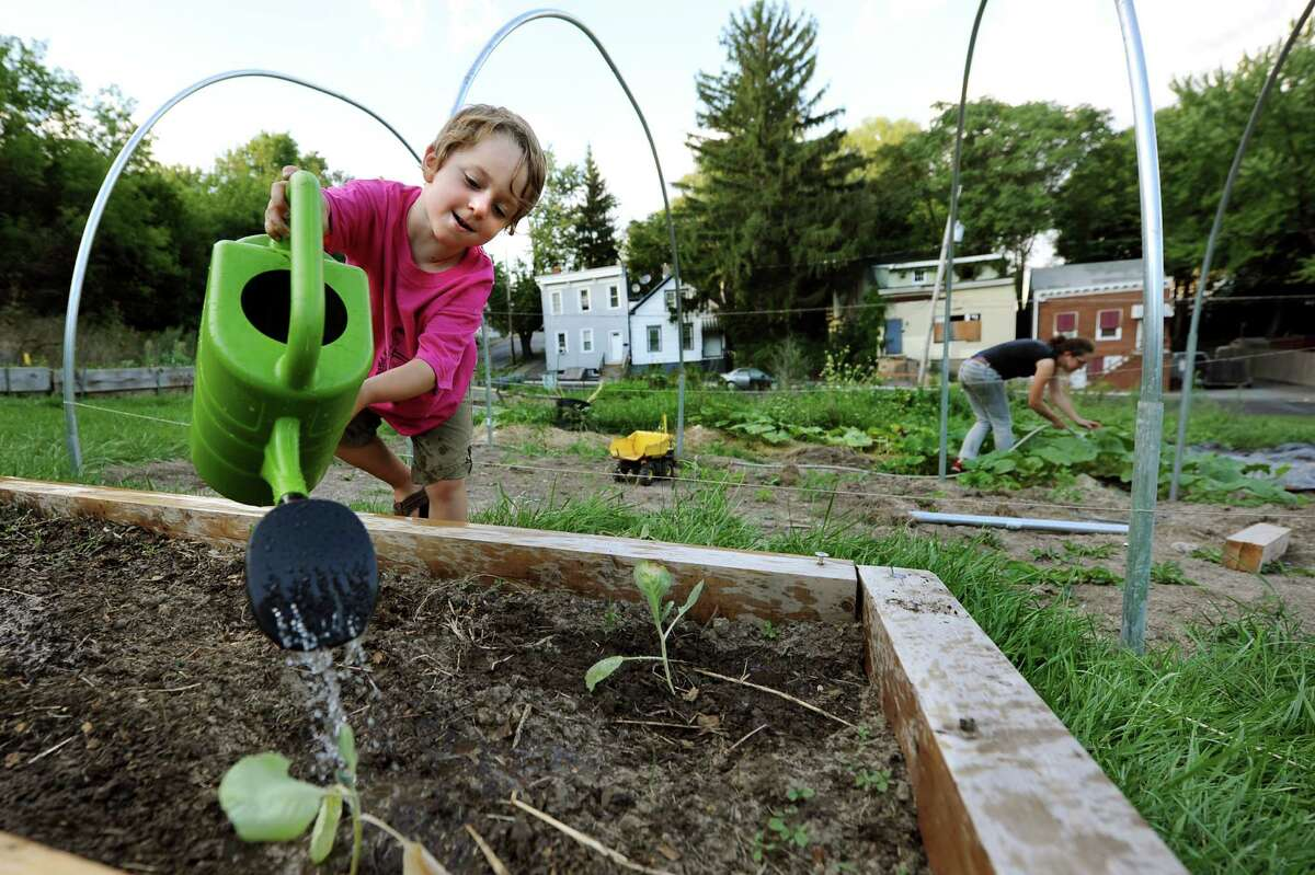 Roscoe Morrison, 3, who's the son of director Rana Morris, helps his mother water the garden on Thursday, Aug. 23, 2012, at Youth Organics garden in Albany, N.Y. (Cindy Schultz / Times Union)