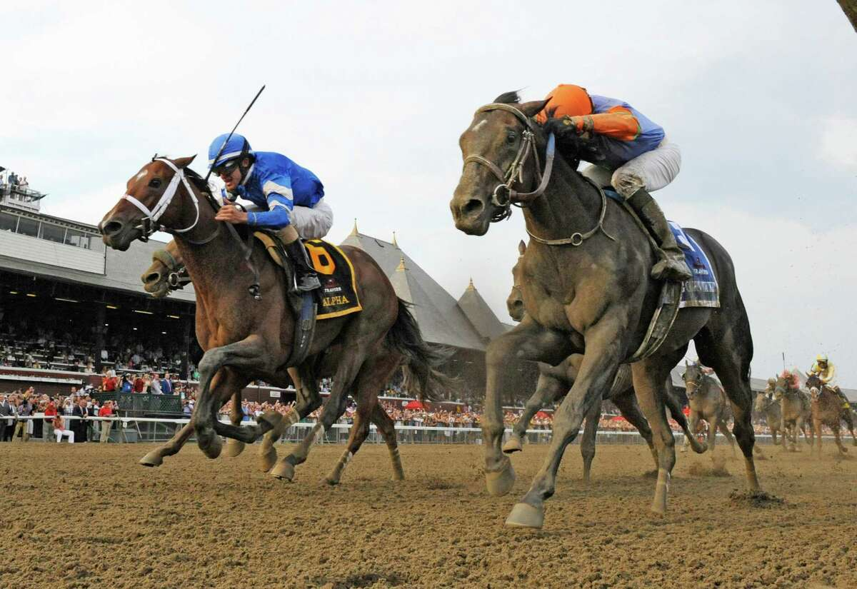 Alpha with jockey Ramon Dominguez, dead heats with Golden Ticket with jockey David Cohen for the win in the 143rd running of The Travers Stakes at the Saratoga Race Course in Saratoga Springs, N.Y. Aug. 25, 2012. (Skip Dickstein/Times Union)