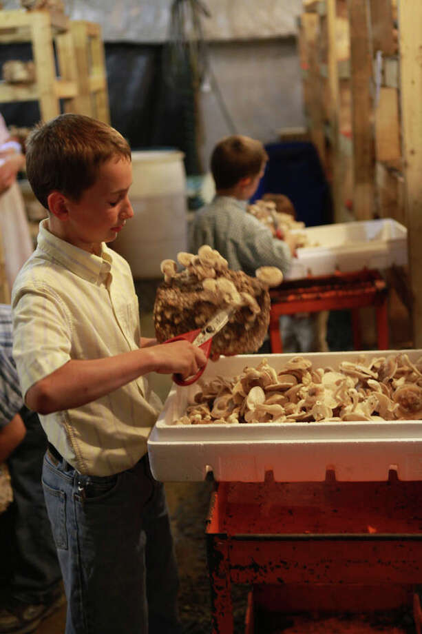 Zehr and Sons' Mushroom Farm in Columbia County is a family business that has flourished through involvement in farmers markets throughout the region. Read the full story  here. Photo: Krishna Hill/Life@Home