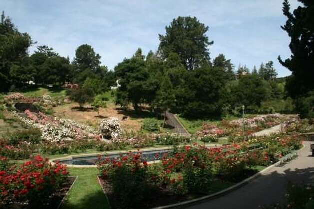 The stairs at the Morcom Municipal Rose Garden are often used for workouts, but the idyllic setting makes the steps worthy of a leisurely stroll.  (Tara Rocha)