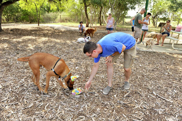 SLUG: Doggy Birthday-AssignID 444398-August 26, 2012-San Antonio, Texas---Frank Salvadore feeds Woof Gang Bakery birthday cake to his dog Duncan during a party for the dog at McAllister Park recently. Photo: Robin Jerstad, Robin Jerstad/For The Express-Ne / ROBIN JERSTAD     210 254 6552