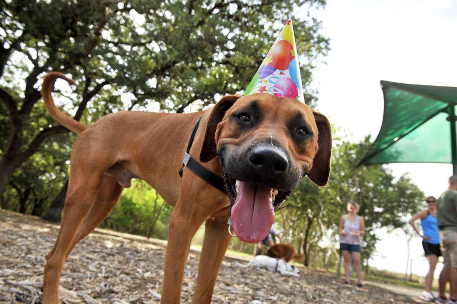 SLUG Doggy Birthday AssignID 444398 August 26 2012 San Antonio
