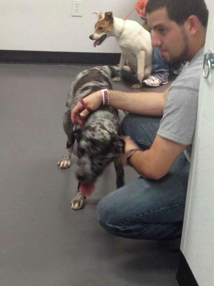 Houston SPCA takes in 70 animal evacuees from Louisiana on Tuesday as Hurricane Isaac neared landfall. Photo: .