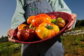 Jere Gettle poses with a variety of heirloom tomatoes including Yellow Brandy Wine, Cherokee Purple, Aunt Ruby German Green and Marbled Stripped at the Petaluma Bounty's Farm on September 4, 2011 in Petaluma, Calif.