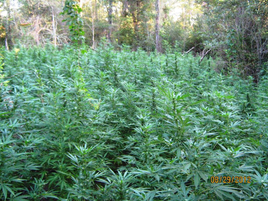 buy weed in houston