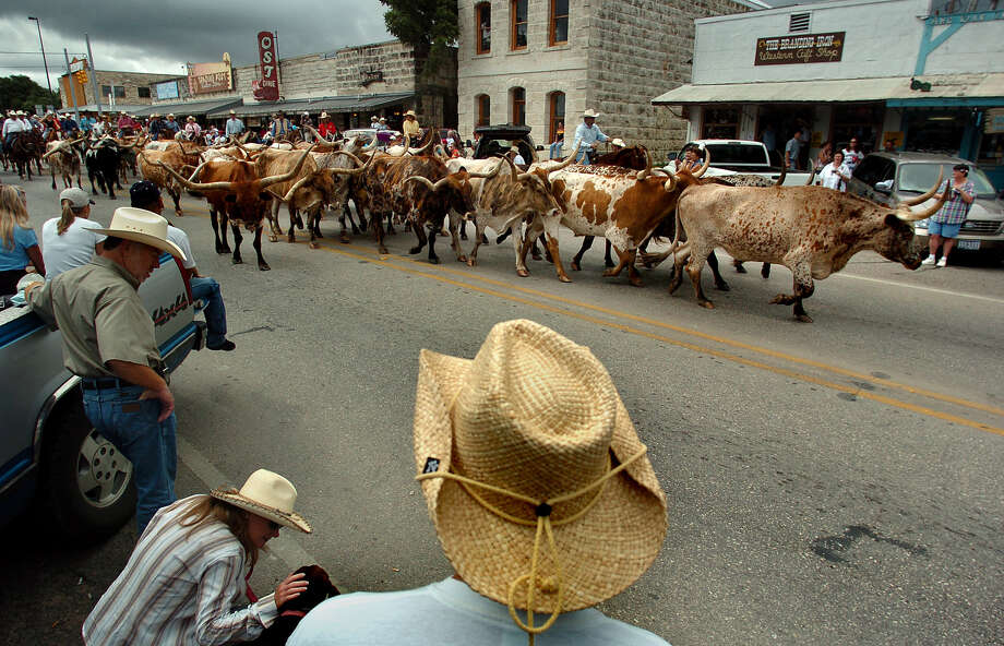 "Longhorns take part in Celebrate Bandera in the city's downtown. The city earned the title of ""Cowboy Capital of the World"" partly for its role as a staging area for cattle drives along the Great Western Trail. Photo: KIN MAN HUI, SAN ANTONIO EXPRESS-NEWS / SAN ANTONIO EXPRESS-NEWS"