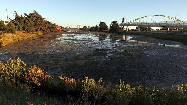 The North end of the Aquatic Park in Berkeley has been collecting algae for years, but the city government has done nothing to eradicate the problem that residents have been complaining about for years. Tuesday August 28, 2012. Photo: Lance Iversen, The Chronicle