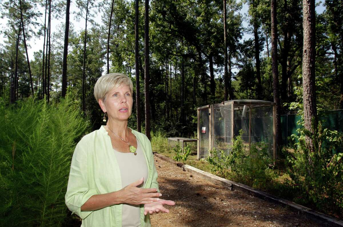 Some of the donated research bodies are placed inside caged areas, where decomposition is monitored by cameras, says Dr. Joan Bytheway, director of the Huntsville facility. Bodies are accorded dignity, she says.