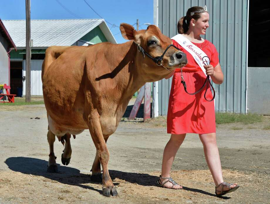 """Rensselaer County Dairy Princess Courtney Luskin, 17, of Valley Falls and her Jersey cow """"Spice"""" outside the 4H Dairy Barn on opening day of the Schaghticoke Fair Wednesday Aug. 29, 2012.   (John Carl D'Annibale / Times Union) Photo: John Carl D'Annibale / 00018955A"""