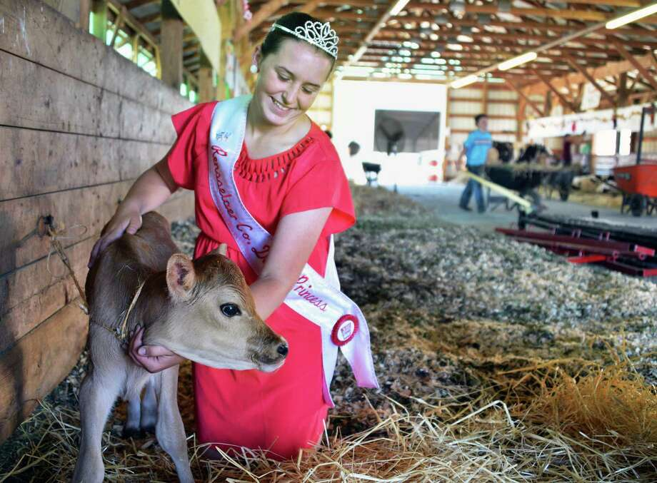 "Rensselaer County Dairy Princess Courtney Luskin, 17, of Valley Falls with her Jersey calf ""Peppermint Pattie"" in the 4H Dairy Barn on opening day of the Schaghticoke Fair Wednesday Aug. 29, 2012.   (John Carl D'Annibale / Times Union) Photo: John Carl D'Annibale / 00018955A"