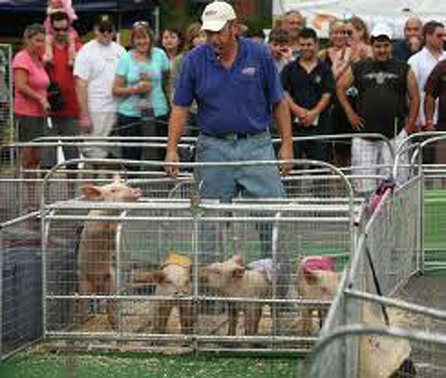 Pigs won't be flying but they will be racing this weekend at the 5thannual Blues, Views & BBQ Festival. Photo: File Photo / Westport News