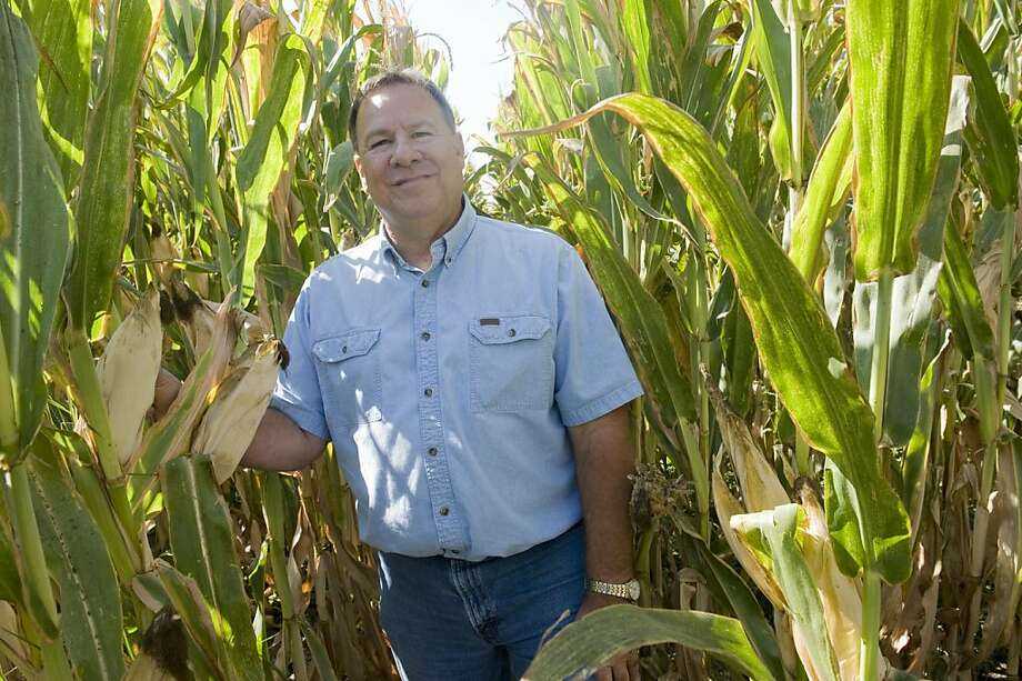 Corn grower Rick Martinez of Dixon has held off on selling 50 percent of his crop as prices rise. Photo: Susana Bates, Special To The Chronicle