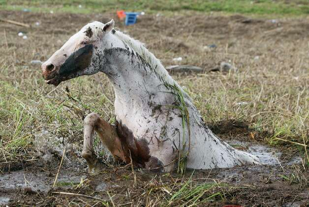 An injured horse tries to free itself mud in the aftermath of Isaac Friday, Aug. 31, 2012, in Ironton, La. Isaac is now a tropical depression, with the center on track to cross Arkansas on Friday and southern Missouri on Friday night, spreading rain through the regions. Photo: John Bazemore, Associated Press / AP