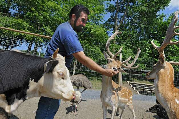 Zoo owner Jeff Ash feeds some deer, a cow, emu and turkeys at the Ashville Game Farm and Exotic Zoo on Tuesday, July 24, 2012 in Greenwich, N.Y. (Lori Van Buren / Times Union) Photo: Lori Van Buren