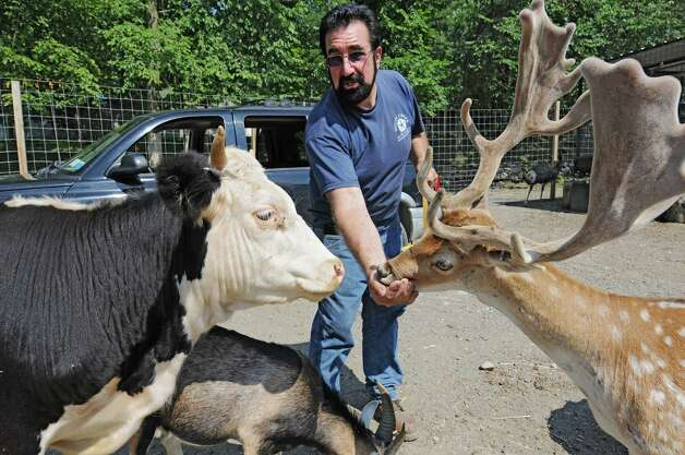 Zoo owner Jeff Ash feeds a deer, a cow and a goat at the Ashville Game Farm and Exotic Zoo on Tuesday, July 24, 2012 in Greenwich, N.Y. (Lori Van Buren / Times Union) Photo: Lori Van Buren