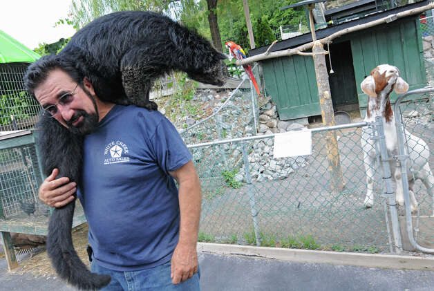 Zoo owner Jeff Ash carries a Binturong on his shoulders at the Ashville Game Farm and Exotic Zoo on Tuesday, July 24, 2012 in Greenwich, N.Y. A goat and parrot look on in the background. (Lori Van Buren / Times Union) Photo: Lori Van Buren