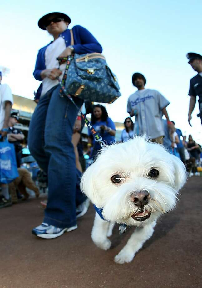 Oakland City Council debating a dog park issue. Photo: Stephen Dunn, Getty Images