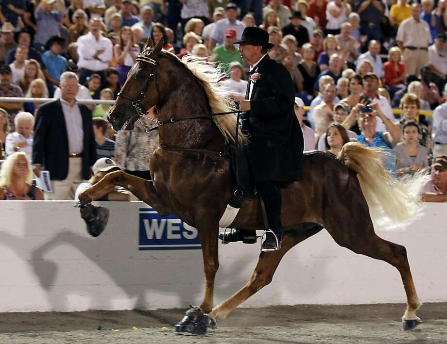 Chad Baucom shows the horse Walk Time Charlie around the arena in the World Grand Championship class on the final night the 2012 Tennessee Walking Horse National Celebration in Shelbyville, Tenn . Baucom and Walk Time Charlie went on to win the World Grand Champion title. (AP Photo/Chattanooga Times Free Press, Alyson Wright) THE DAILY CITIZEN OUT; NOOGA.COM OUT; CLEVELAND DAILY BANNER OUT; LOCAL INTERNET OUT Photo: Alyson Wright, Associated Press