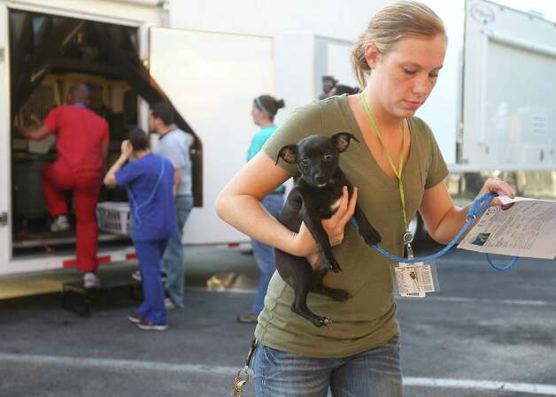 Janella Clay, an employee with the Houston SPCA,  carries a dog from the truck as members of the SPCA unload cats, dogs, puppies, kittens, and bunnies, all evacuees from the effects of Hurricane Issac, at the SPCA, Monday, Sept. 3, 2012, in Houston. Photo: Karen Warren, Houston Chronicle / © 2012  Houston Chronicle