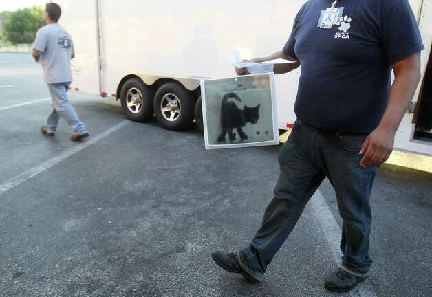 Robert Hernandez,  an employee with the Houston SPCA,  carries a cat from the truck as members of the SPCA unload cats, dogs, puppies, kittens, and bunnies, all evacuees from the effects of Hurricane Issac, at the SPCA, Monday, Sept. 3, 2012, in Houston. Photo: Karen Warren, Houston Chronicle / © 2012  Houston Chronicle
