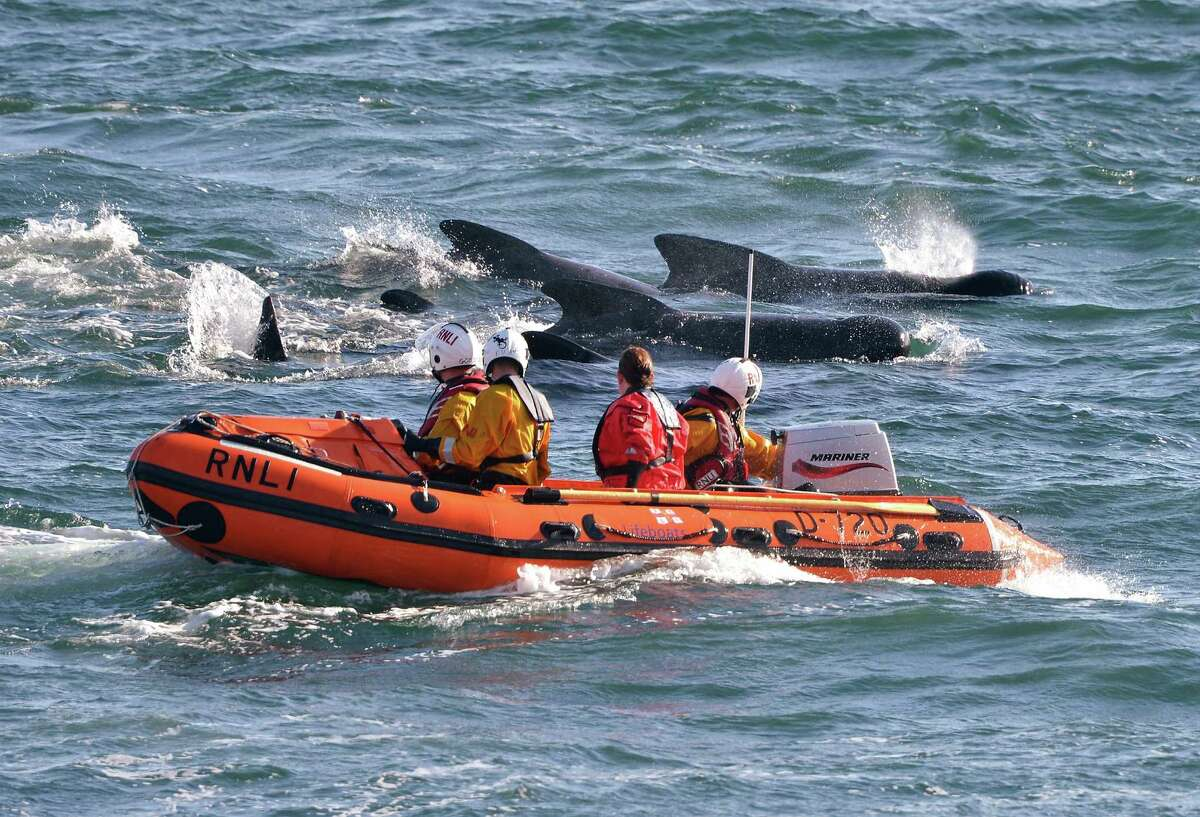 PITENWEEM, SCOTLAND - SEPTEMBER 02: Emergency services attempt to rescue a large number of pilot whales who have beached on September 2, 2012 in Pittenweem, near St Andrews, Scotland. A number of whales have died after being stranded on the east coast of Scotland between Anstruther and Pittenweem.