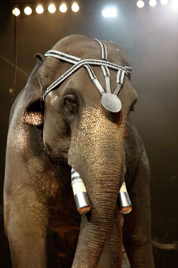 The Mighty Bo, a performing elephant, is one of the stars of the Alzafar Shrine Circus Photo: Courtesy Alzafar Shriners