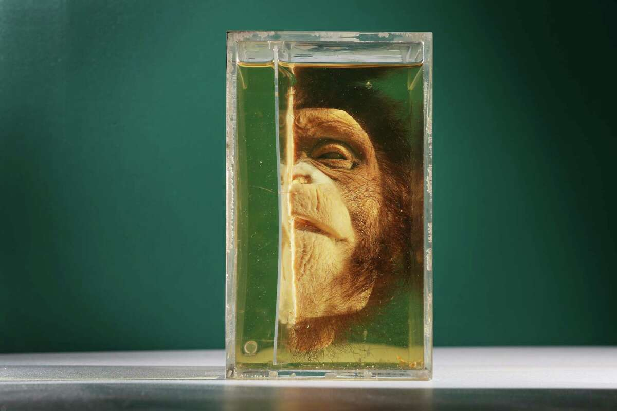 The Grant Museum Of Zoology in London houses a collection of