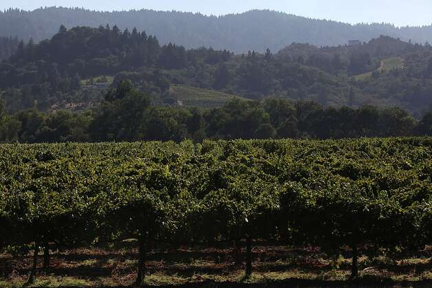 The vineyards at Rued winery in Sonoma County, Calif., on Thursday, August  30, 2012. Photo: Liz Hafalia, The Chronicle