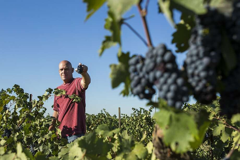 Winemaker and grower Michael McCay stands in his newly acquired Zinfandel vineyard, which dates back to 1915, in the Mokelumne River area near Lodi. Photo: Ken James, SFC