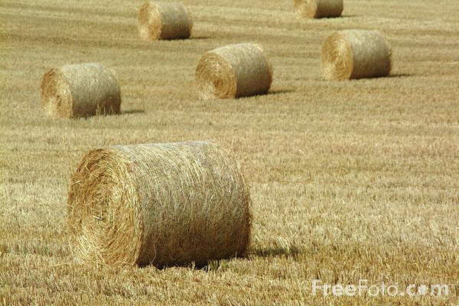 A field full of hay Photo: Courtesy Photo