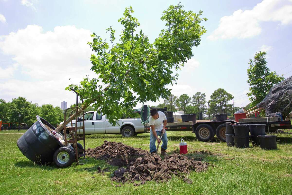 Carlos Ortiz plants a tree at Tanglewood Park in Houston.
