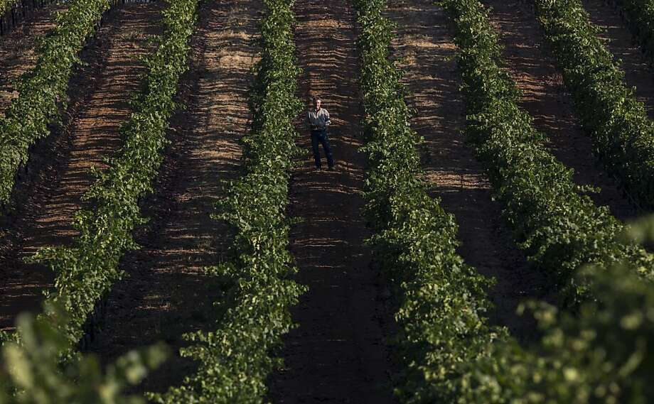 Wine Maker Markus Bokisch inspecting his vineyard at the Vista Luna site, in Borden RanchCalifornia, on Monday September 03rd 2012 By Ken James/SPECIAL TO THE CHRONICLE Photo: Ken James, SFC