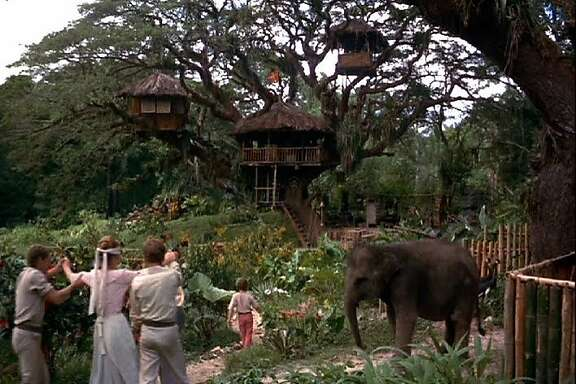 "A scene from ""Swiss Family Robinson.""  Father Robinson (John Mills) and the boys (James MacArthur, Tommy Kirk and Kevin Corcoran) lead Mother Robinson (Dorothy McGuire) blindfolded to surprise her with the treehouse they've built."