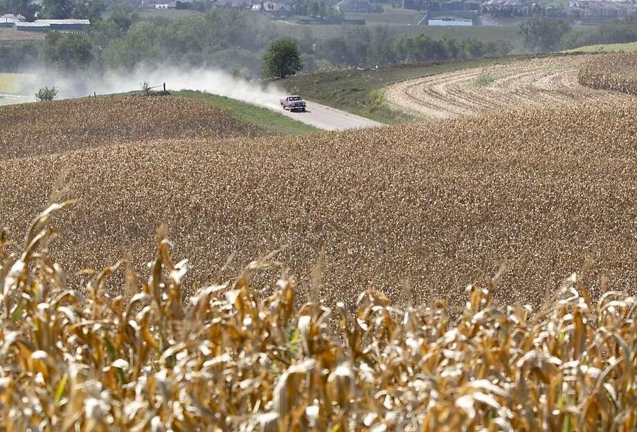 A pickup truck travels a dusty road amidst dry cornfields near Bennington, Neb. Photo: Nati Harnik, Associated Press