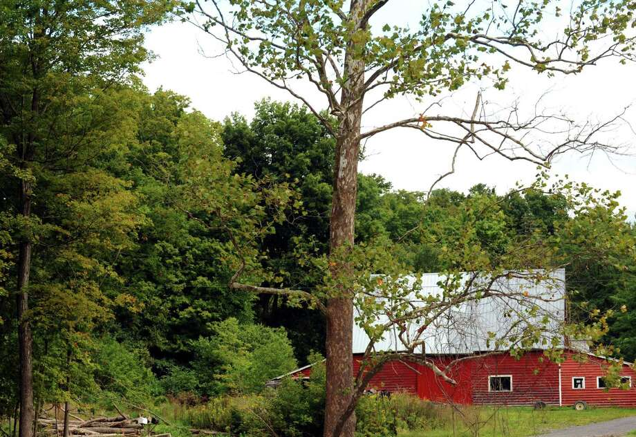 A tree losing its leaves on Route 443 in West Berne, N.Y., Wednesday Sept. 5, 2012. (Michael P. Farrell/Times Union) Photo: Michael P. Farrell