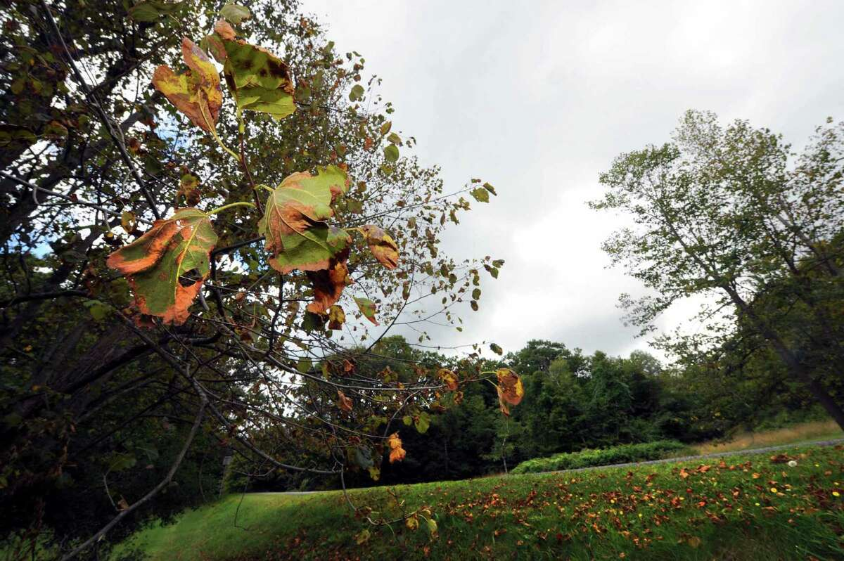 A tree losing its leaves at Thacher State Park in New Scotland, N.Y. Wednesday Sept. 5, 2012. (Michael P. Farrell / Times Union)