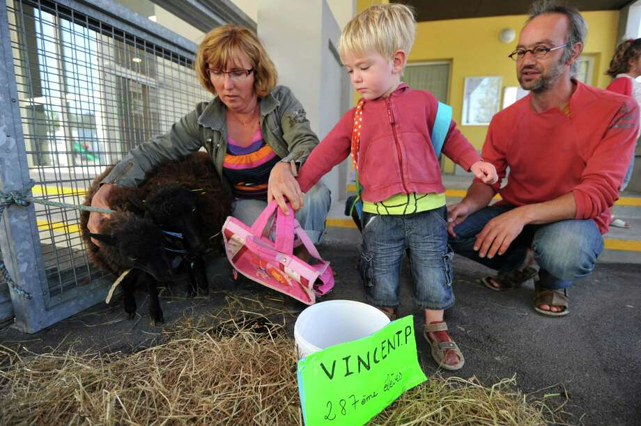 "A young pupil with his father  hands a school bag to a black sheep of Ouessant standing with its mother and named after French Education Minister Vincent Peillon as ""Vincent P."", and symbolically registered as the school's 287th pupil, on Friday at the Jules Simon primary school, in Saint-Nazaire, western France, while parents are occupying the school to protest against the local academic authorities to close the school's 12th classroom due to only one pupil missing in the school's overall amount of pupils.        (FRANK PERRY/AFP/GettyImages) Photo: FRANK PERRY, Ap/getty / 2012 AFP"