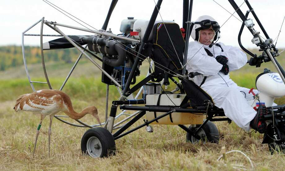 "Russian President Vladimir Putin looks at a crane as he takes part in a scientific experiment as part of the ""Flight of Hope"", which aims to preserve a rare species of - cranes  in the Jamalo-Nentsky region on Wedneday.  At the helm of a motorized hang glider that the birds have taken as their leader, Putin made three flights - the first to get familiar with the process, and two others with the birds.         ( ALEXEY DRUZHININ/AFP/GettyImages) Photo: POOL, Ap/getty / 2012 AFP"