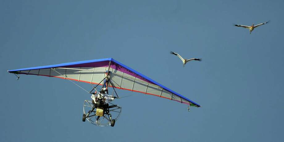 "Russian President Vladimir Putin pilots a motorized hang glider while flying with cranes as he takes part in a scientific experiment as part of the ""Flight of Hope"", which aims to preserve a rare species of - cranes on Wednesday.  At the helm of a motorized hang glider that the birds have taken as their leader, Putin made three flights - the first to get familiar with the process, and two others with the birds. (ALEXEY DRUZHININ/AFP/GettyImages) Photo: POOL, Ap/getty / 2012 AFP"