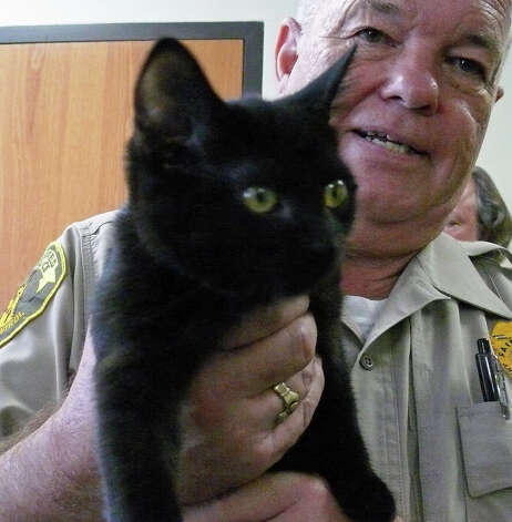 "Assistant Animal Control Officer Bill McDonough shows off ""Gerry,"" the latest Animal Shelter resident to be featured as the ""Wednesday's Pet"" at the Board of Selectmen meeting. Photo: Genevieve Reilly / Fairfield Citizen"