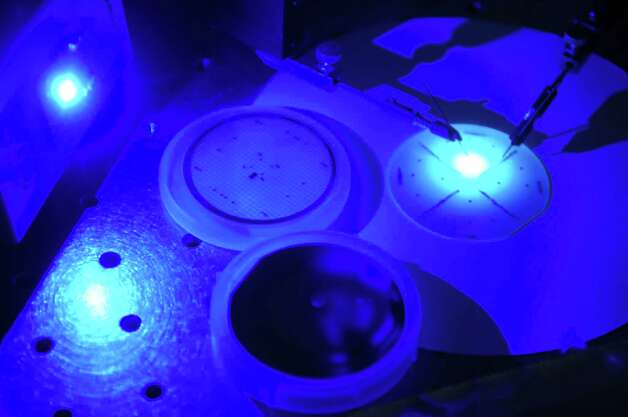 A blue light emitting diode (LED), left, an LED on sapphire, top center, an LED on silicon, bottom center, and an LED on sapphire with current being injected into it, generating light, far right, are seen in the College of Nanoscale Science and Engineering lab of Shadi Shahedipour-Sandvik, associate professor of Nanoengineering at the CNSE's Wide Bandgap Optronix Lab on Thursday, March 8, 2012 in Albany, NY.   LED on silicon is a way to reduce manufacturing costs which in turn would bring the price of LEDs down for consumers.  (Paul Buckowski / Times Union) Photo: Paul Buckowski / 00016733A
