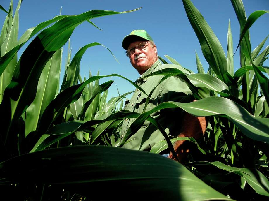 """Bill Slomchinski, a farmer in the Poteet area, just south of San Antonio, says of his fall corn crop: """"It looks good at this point."""" Photo: Billy Calzada / San Antonio Express News"""