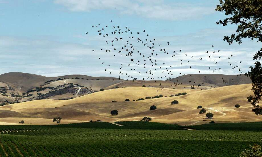The vineyards and rolling hills of Hames Valley, near Bradley, Calif., is part of the latest stage for California's battle over fracking. Photo: Michael Macor / ONLINE_YES