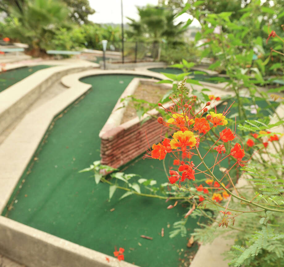 Various kinds of vegetation, including banana and lemon trees, started to take over the holes at the closed Cool Crest miniature golf course on Fredericksburg Road. Aug. 25, 2012. Photo: Robin Jerstad,  For The Express-News