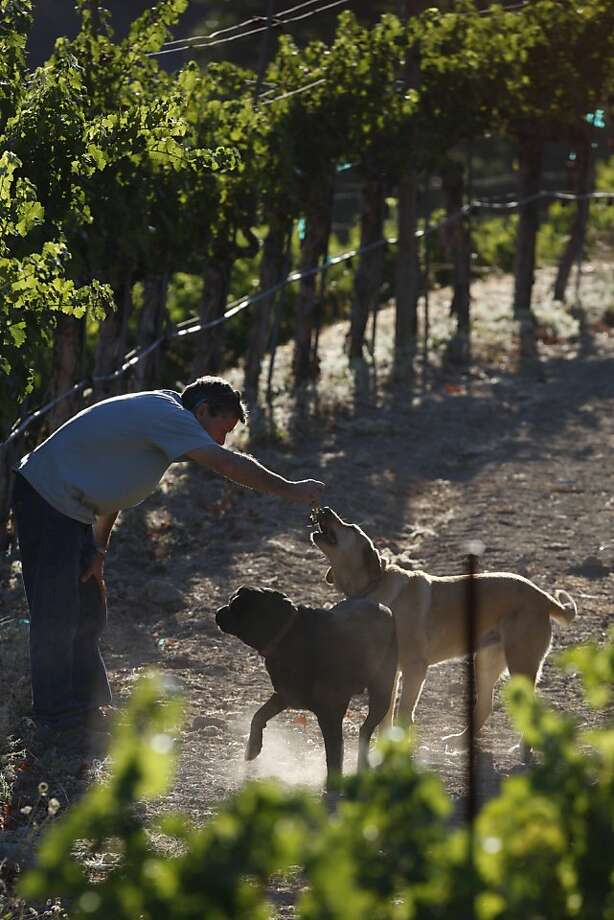 Owner Rudy Von Strasser, along with Labradors Donner and Echo often make up the casual and friendly Calistoga winery's welcoming party. Photo: Eric Luse, The Chronicle