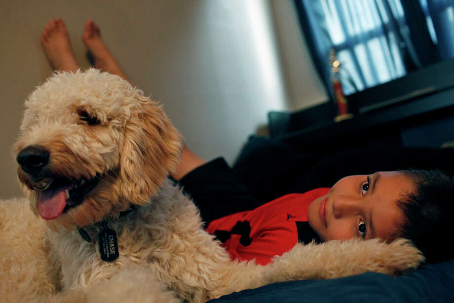 Adrian Chavez, 8, spends time with his autism service dog, Chase, at his home in San Antonio on Saturday, Sept. 9, 2012. Photo: Lisa Krantz, San Antonio Express-News / San Antonio Express-News
